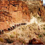 Mule Train - Grand Canyon